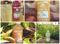 Raleigh Raw Juice collage, via Instagram (jenwike)